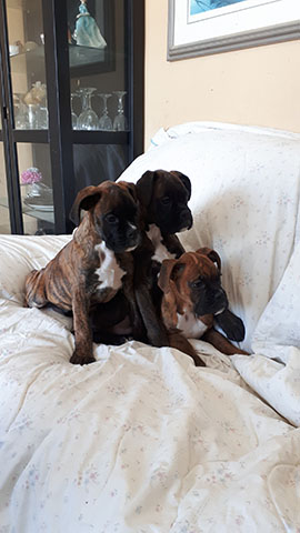 3 males available in February to go to their forever homes